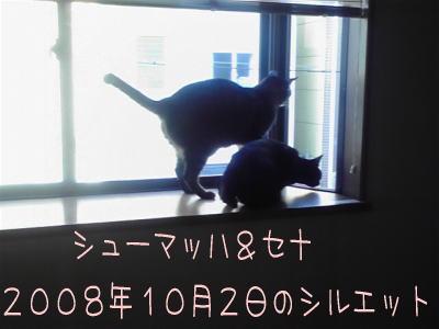 2008100207190000.jpg