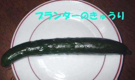ミニきゅうり6