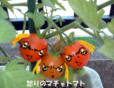 怒りのまちゃトマト