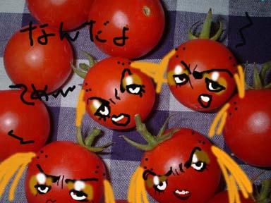 まちゃトマト収穫