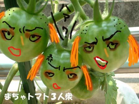 まちゃトマト