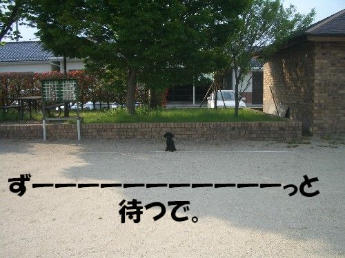 2008051851a.jpg