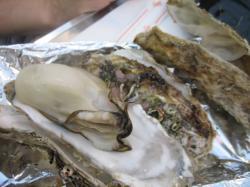 ビックリの大きさ!牡蠣3個で500円(!o!)