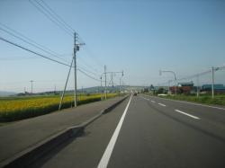 旭川に帰る道は「ひまわりロード」(*^_^*)