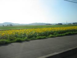こちらはきれいに咲いていました(^^)V