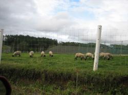 羊、ヤギ、ポニー かわいいですね(*^_^*)