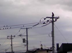 しばらくすると、トンビが電柱に(*^_^*)