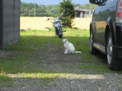 お店の外に・・・白猫(=^..^=)