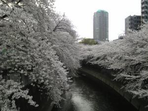 神田川02