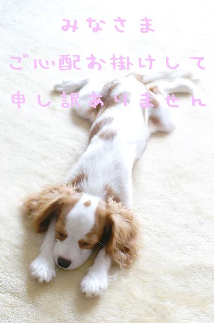 PICT0876 お礼