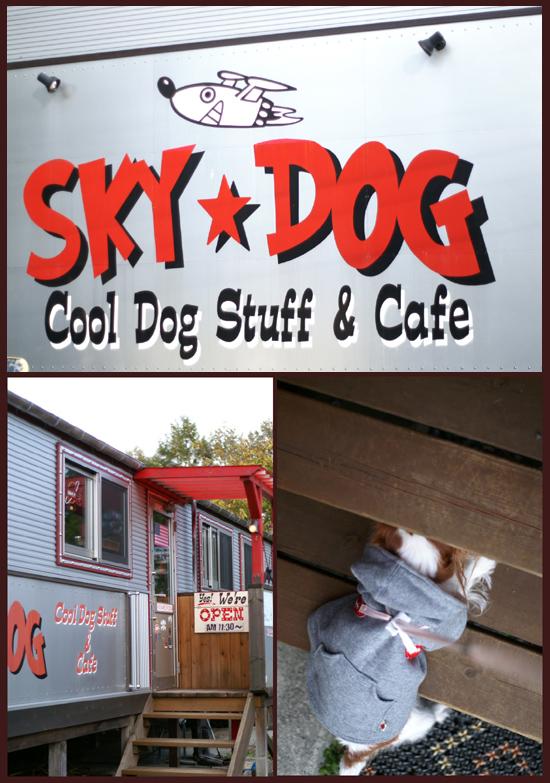 SKY ★ DOG
