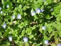 朝比奈ー鎌倉の花3