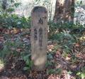 三浦アルプス幻桜の巻14