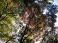 20081129鎌倉(獅子舞-お塔の窪やぐら)16