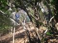 鐘ヶ嶽-第26号-三峰山-日向キャンプ場14
