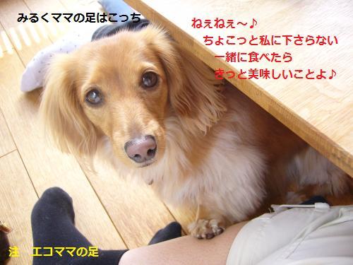 P1040897_convert_20080515195349.jpg