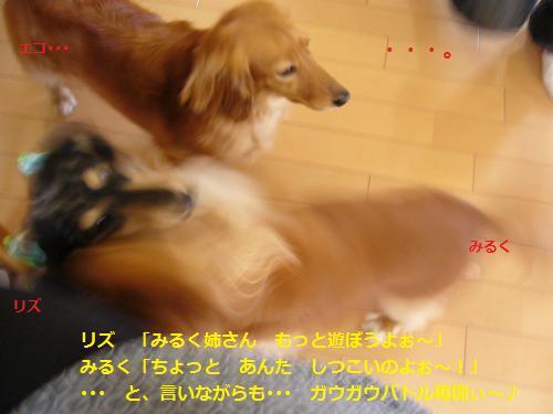 P1050096_convert_20080524204932.jpg