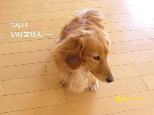 P1050112_convert_20080524204727.jpg