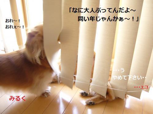 P1050127_convert_20080524204441.jpg