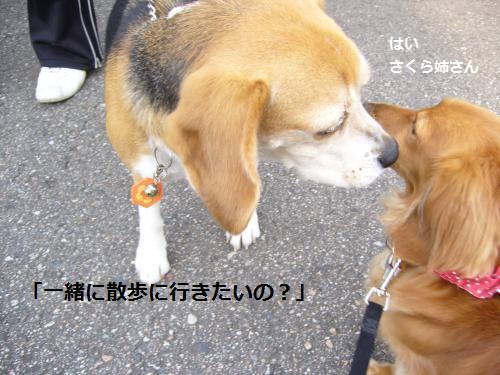 P1050144_convert_20080522190106.jpg