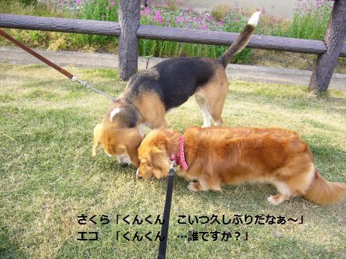 P1050172_convert_20080523203837.jpg