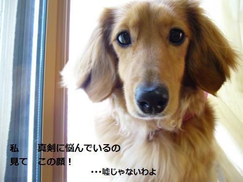 P1050455_convert_20080530180316.jpg