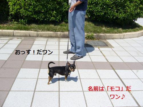 P1050493_convert_20080528182201.jpg