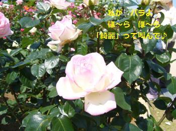 P1050508_convert_20080528182722.jpg
