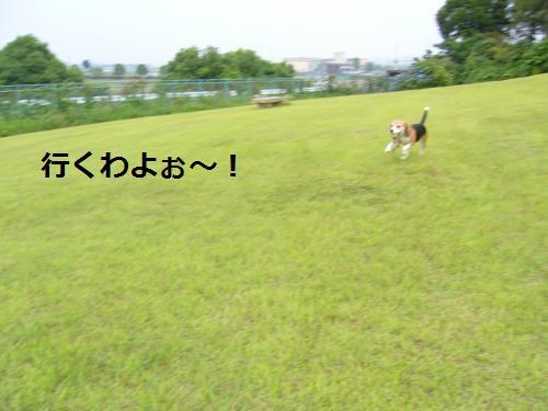P1050831_convert_20080611181155.jpg