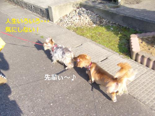 P1060427_convert_20080702180811.jpg