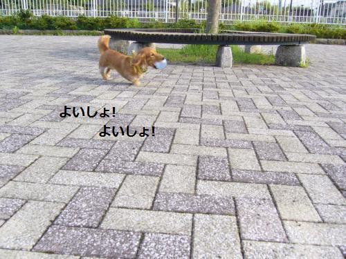 P1070274_convert_20080804180915.jpg