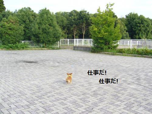 P1070284_convert_20080804180745.jpg
