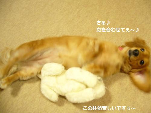 P1070515_convert_20080819162145.jpg