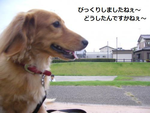 P1070727_convert_20080902185032.jpg