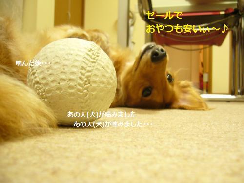 P1080097_convert_20080926201336.jpg