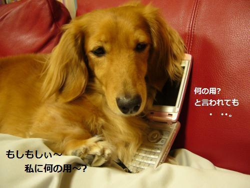 P1080103_convert_20080928181222.jpg