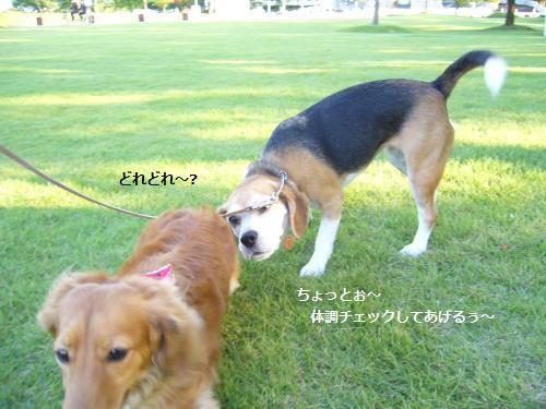 P1080151_convert_20081002192730.jpg