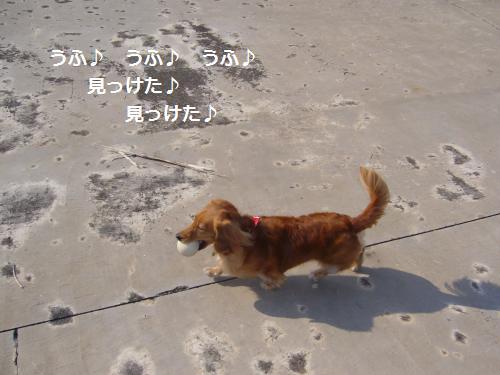 P1080342_convert_20081024185037.jpg