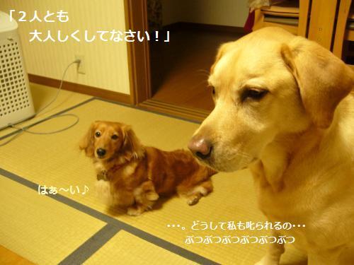 P1080523_convert_20081119143753.jpg
