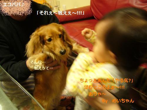P1080683_convert_20090106124651.jpg