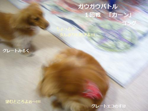 P1080695_convert_20090123150443.jpg