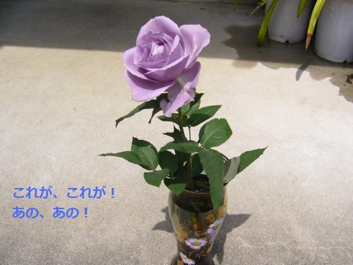 P1080916_convert_20090420181852.jpg