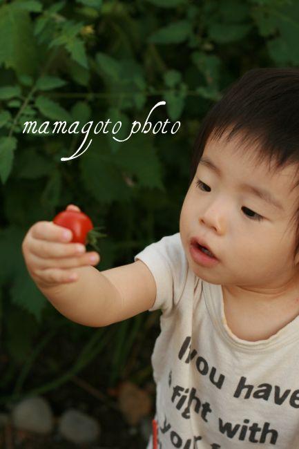 tomato2_20090819211458.jpg
