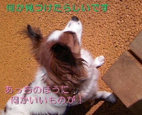 09032111_1.jpg