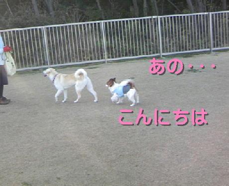 09033006_1.jpg