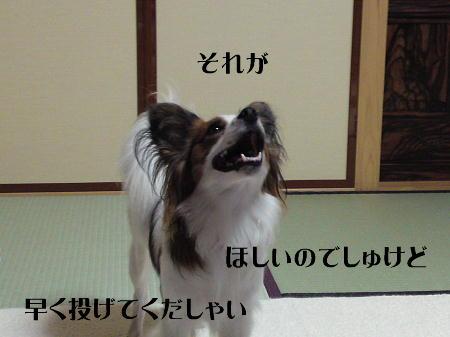 09071203_1.jpg