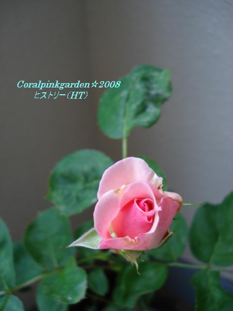 ベランダ 028