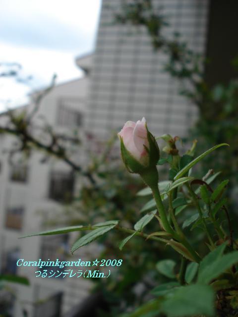 ベランダ 006