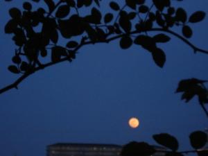 縮小月の景色