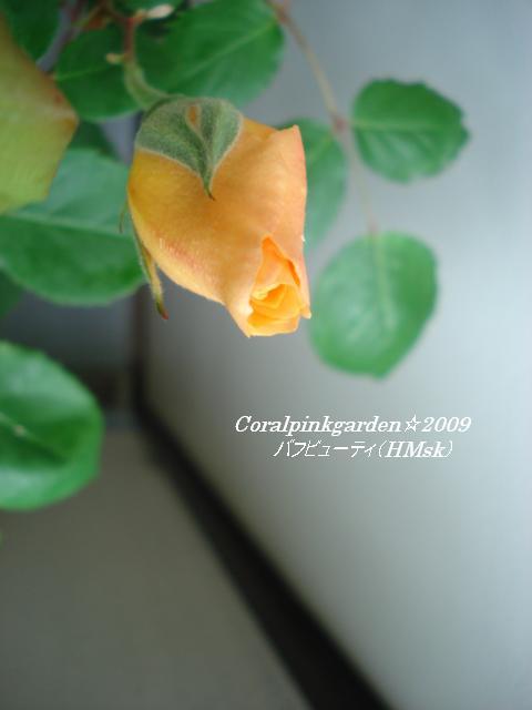 DSC05631.jpg